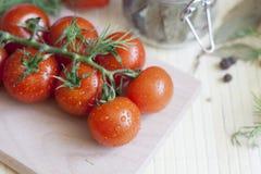 Tomates sur une branche Photographie stock libre de droits
