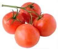 Tomates sur une branche Photo libre de droits