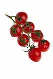 Tomates sur une brindille. Image stock
