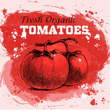 Tomates tirées par la main de style de croquis Photos libres de droits