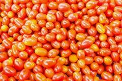Tomates Totalité et une moitié Photos libres de droits