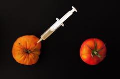 Tomates transgênicos Fotografia de Stock Royalty Free