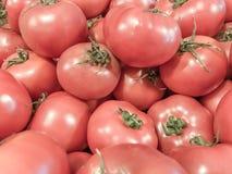 Tomates vegetais Alimento saudável do verão Tomates frescos Tomates vermelhos Tomates orgânicos do mercado da vila Fotos de Stock Royalty Free