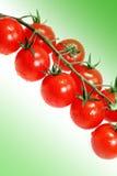 Tomates vegetales Fotos de archivo libres de regalías