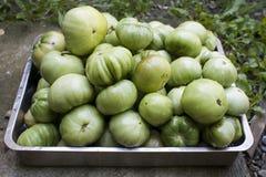 Tomates verdes Fotografía de archivo
