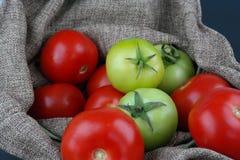 Tomates verdes e vermelhos Imagens de Stock