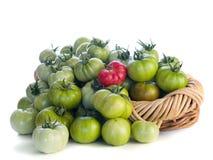 Tomates verdes y un rojo uno Fotografía de archivo