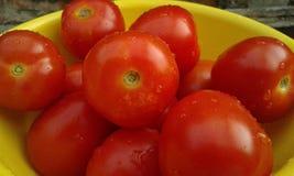 Tomates vermelhos imagem de stock