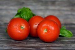 Tomates vermelhos brilhantes frescos e maduros saudáveis com as folhas do basilicum no fundo de madeira foto de stock royalty free