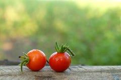 Tomates vermelhos com gotas da chuva Imagens de Stock