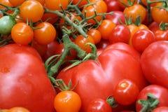 Tomates vermelhos e alaranjados Foto de Stock