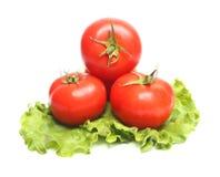Tomates vermelhos e alface verde imagem de stock royalty free