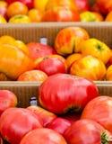 Tomates vermelhos e amarelos Imagem de Stock
