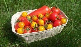 Tomates vermelhos e amarelos Imagens de Stock