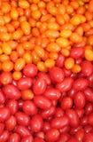 Tomates vermelhos e amarelos orgânicos Imagens de Stock Royalty Free