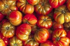 Tomates vermelhos e verdes, e marrons no mercado de Sicília Tomates vermelhos saborosos maduros Tomates orgânicos do mercado da v Foto de Stock