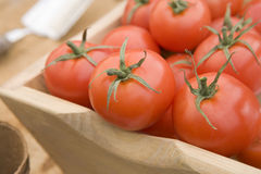 Tomates vermelhos em um Trug de madeira Fotos de Stock