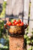 Tomates vermelhos em uma bacia velha em uma placa de madeira fora Foto de Stock Royalty Free