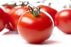 Tomates vermelhos frescos Fotografia de Stock