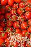 Tomates vermelhos frescos imagens de stock