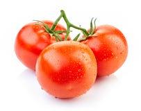 Tomates vermelhos frescos Fotos de Stock Royalty Free