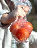 Tomates vermelhos frescos em um pacote Fotos de Stock Royalty Free