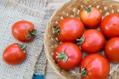 Tomates vermelhos maduros Imagem de Stock Royalty Free