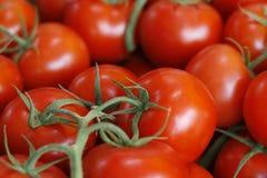 Tomates vermelhos maduros Foto de Stock