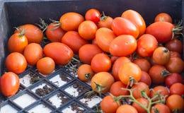 Tomates vermelhos maduros em um escaninho fotos de stock