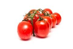 Tomates vermelhos molhados frescos Fotografia de Stock