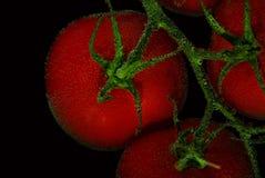 Tomates vermelhos no fundo preto Fotografia de Stock