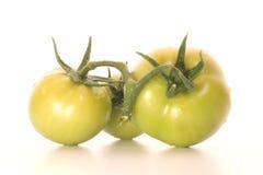 Tomates vertes Photos libres de droits