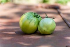 Tomates vertes du cru Images libres de droits