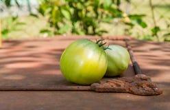 Tomates vertes du cru Photographie stock