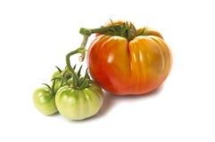Tomates vertes et rouges d'héritage Photos stock