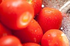 Tomates vibrantes de Roma en colador con gotas del agua Fotografía de archivo libre de regalías