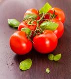 tomates Videira-amadurecidos Foto de Stock Royalty Free
