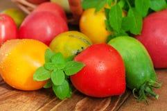 Tomates y albahaca fotos de archivo
