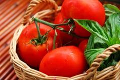 Tomates y albahaca imagen de archivo libre de regalías