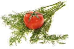 tomates y eneldo Imagenes de archivo