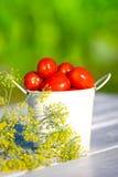 Tomates y eneldo Imágenes de archivo libres de regalías