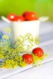 Tomates y eneldo Foto de archivo