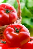 Tomates y ensalada Foto de archivo libre de regalías