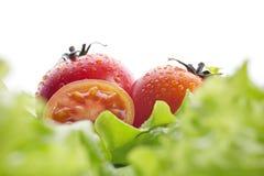 Tomates y ensalada verde Imágenes de archivo libres de regalías
