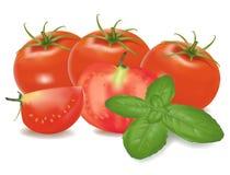 Tomates y hoja de la albahaca. Fotos de archivo