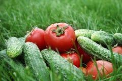 Tomates y pepino en hierba Imagen de archivo