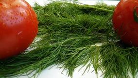 Tomatfänkål på ett vitt bakgrundsultrarapidskott stock video