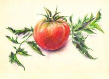 Tomatfärgblyertspennor skissar Stock Illustrationer