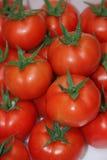 Tomatfrukter Arkivfoton