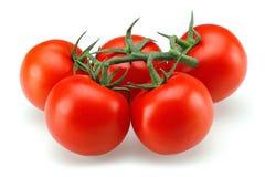 Tomatgrupp Royaltyfria Bilder